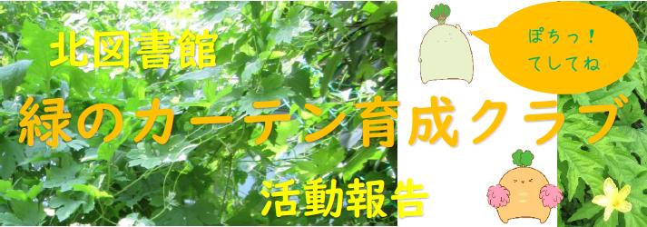 緑のカーテン育成クラブ活動報告